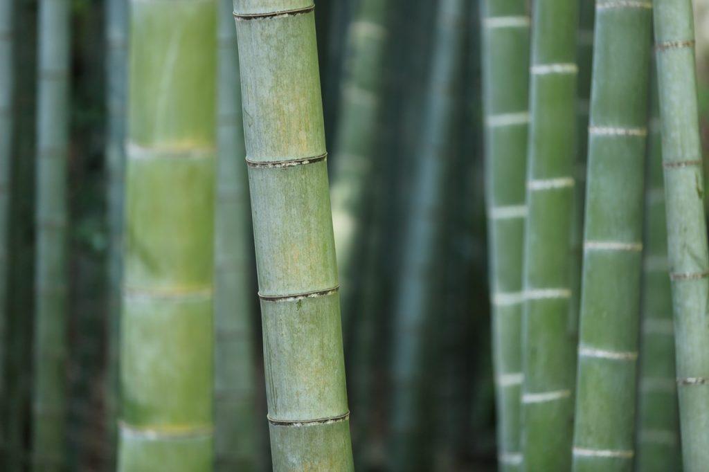 Tarima maciza de bamb un poco m s cerca de la naturaleza - Parquets tropicales ...