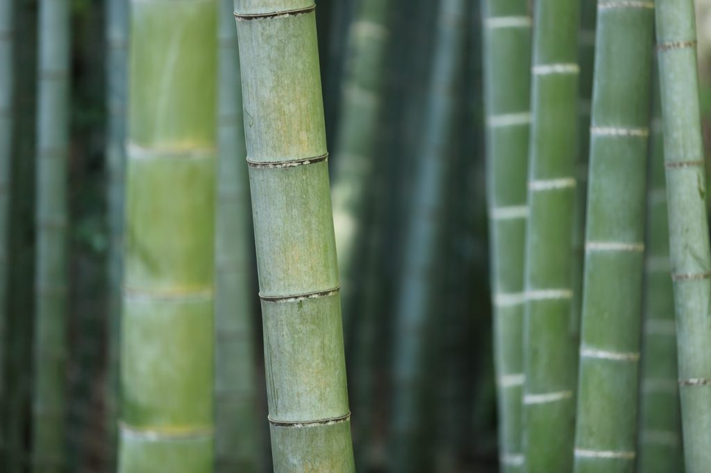 Tarima maciza de bambú - Parquets Tropicales
