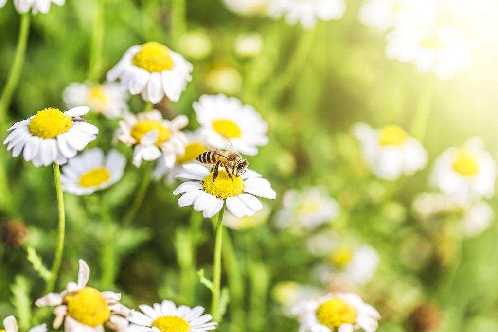 Cera de abejas: devuelve el brillo a tu suelo de parquet